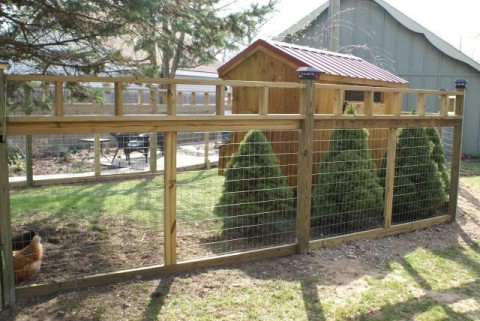 Chicken yard fence