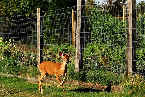 Merveilleux DeerFence