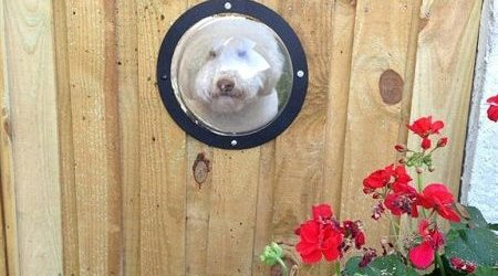 Dog lookout portal