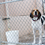 Chain link fencing comes with a long list of problems for your dog